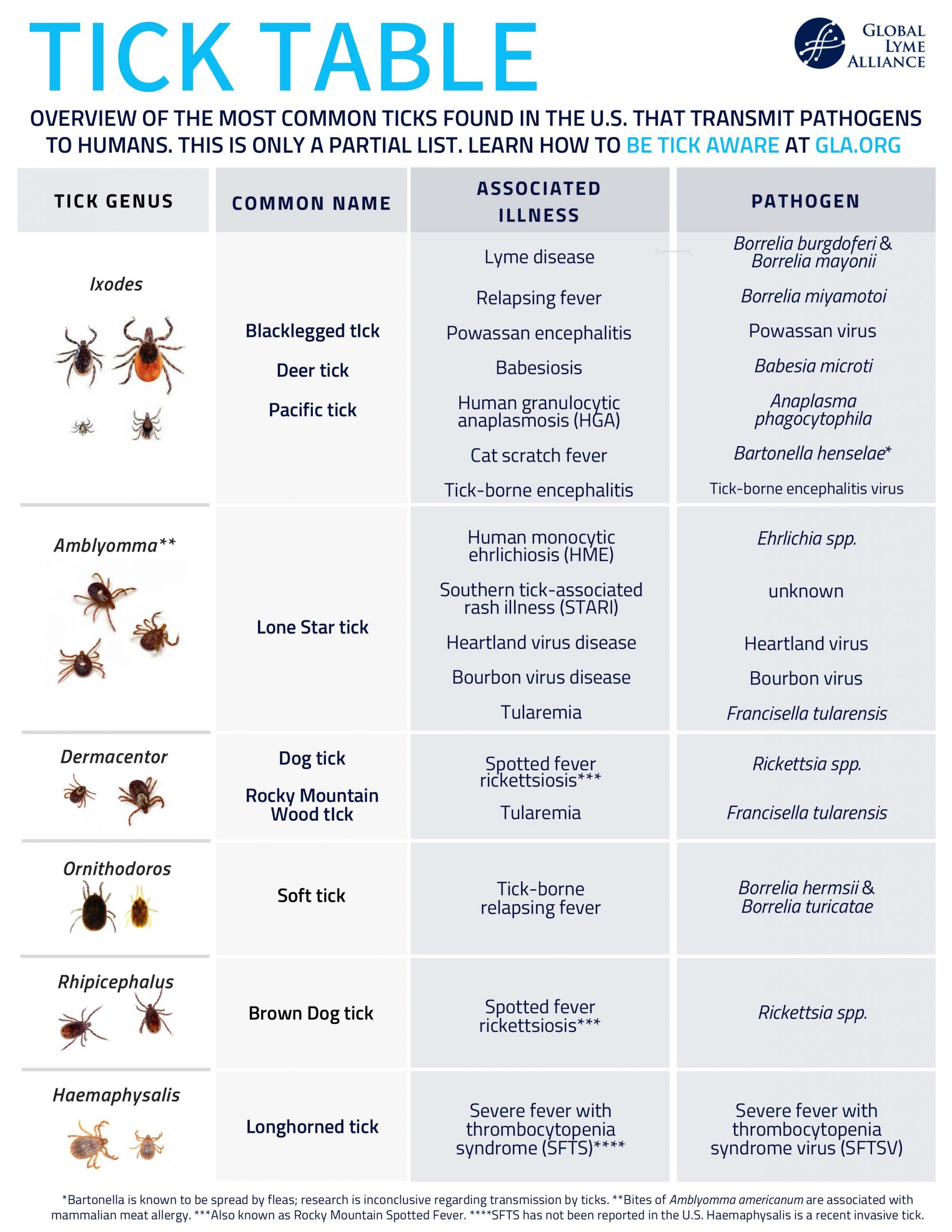 Ticks in the USA